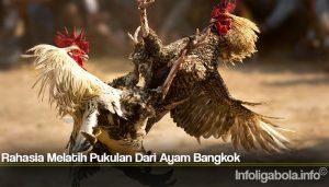 Rahasia Melatih Pukulan Dari Ayam Bangkok