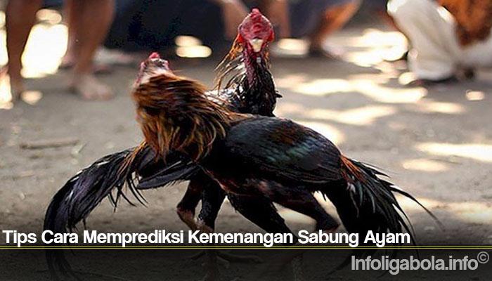 Tips Cara Memprediksi Kemenangan Sabung Ayam
